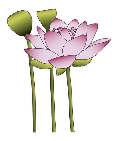 흰색 배경에 큰 핑크색 연꽃