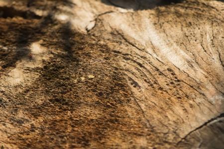 影と日光の木目テクスチャ