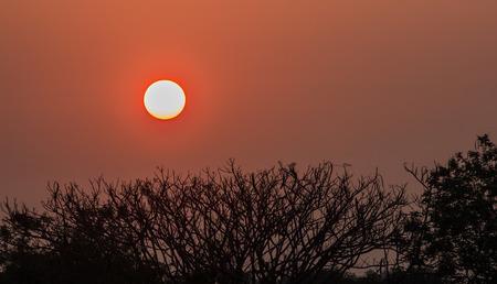 朝の木シルエットの枝の日の出 写真素材