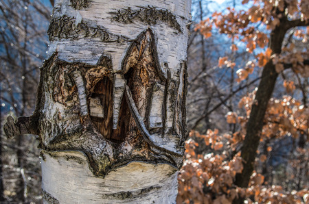 albero: carved Tree Stock Photo