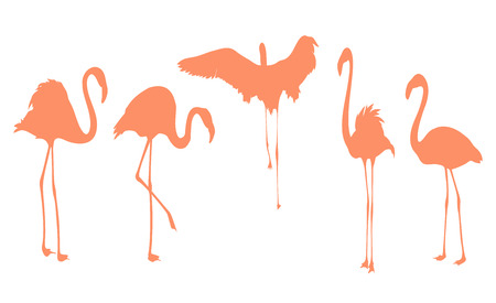 Pink flamingo bird postures silhouette. Isolated outline on white background.