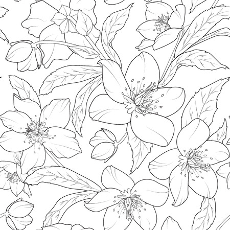 Christmas winter rose hellebore flowers seamless pattern. Lenten rose. Helleborus niger. Detailed black and white outline sketch drawing. Vector design illustration. Vector Illustration