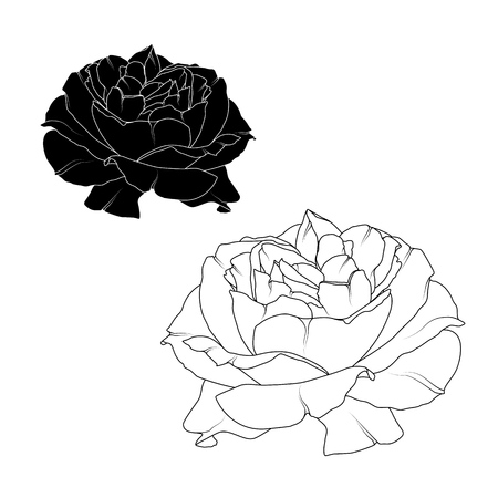 rose tattoo: Realistic blooming rose flower blossom isolated. Black and white detailed outline drawing tattoo style. Ying yang concept. Vector design illustration.