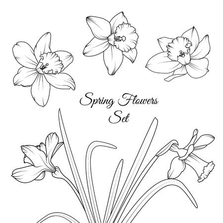 Narcissus daffodil spring flowers reusable isolated elements narcissus daffodil spring flowers reusable isolated elements template set black and white vector design illustration mightylinksfo