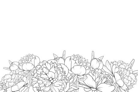 Peony spring summer flowers shrub bloom blossom black and white detailed outline sketch drawing. Bottom border frame horizontal landscape layout. Vector design illustration. Vintage style.