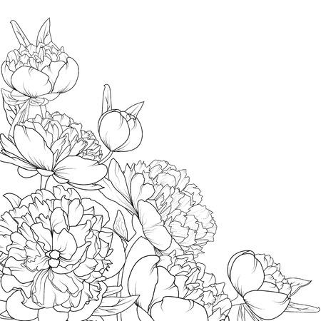 Peony rose garden spring summer flowers black and white detailed outline sketch drawing. Corner border frame decoration element composition. Vector design illustration. Stock Photo