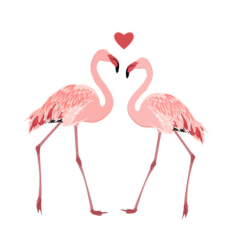 Pink flamingos couple standing beak to beak. Heart shape love feelings symbol element. Exotic tropical wading birds isolated on white background. Vector design illustration.