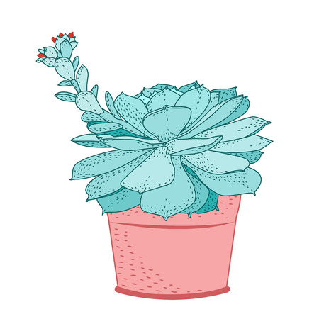 Succulent plant in rustic pot. Green blue turquoise fleshy thick leaves. Stem with small red flowers bloom blossom.
