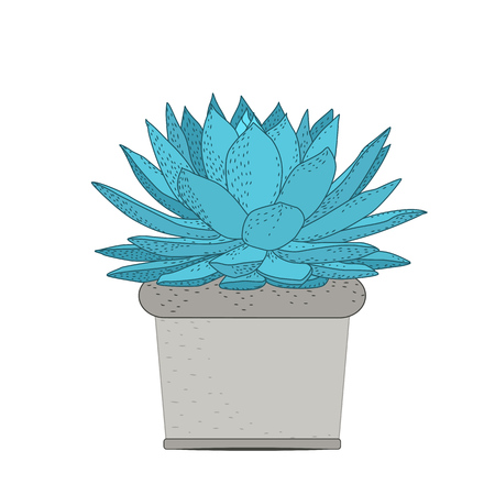Succulent plant in rustic pot. Green blue turquoise fleshy thick leaves. Stem with small grey flowers bloom blossom. Illustration