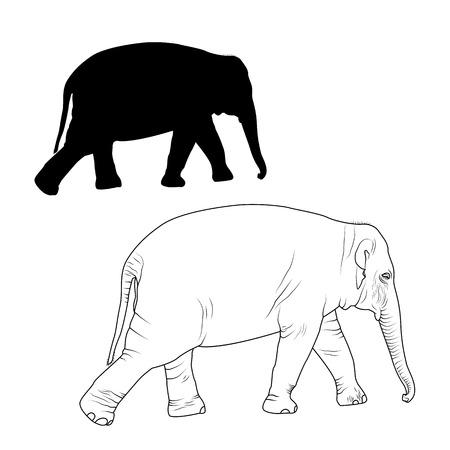 Elefante. Ilustración De Elefante. Ilustración Animal Acuarela Fotos ...