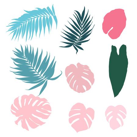 別の植物の葉の図。