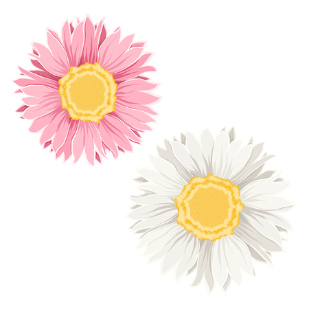 Isolated chamomile daisy flowers on white background. Detailed closeup macro vector design illustration. Spring summer plant. Forgetmenot sign symbol. White, pink and yellow.