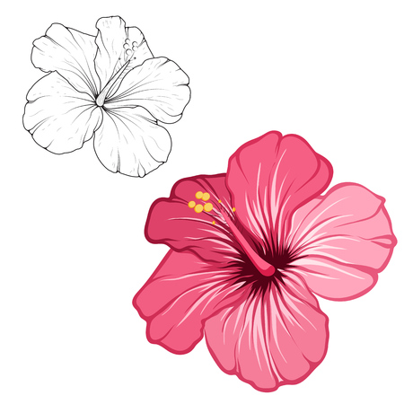 Hibiscus beautiful blooming flower isolated on white background. Closeup macro detailed view. Color black white outline sketch drawing set. Exotic tropical spring summer botanical vector design. Vettoriali