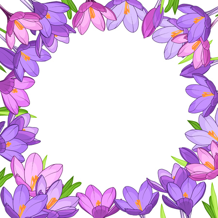 Crocus saffron floral wreath border frame template. Purple violet spring flowers green leaves. Round circle placeholder in the middle. White background. Vector design illustration.