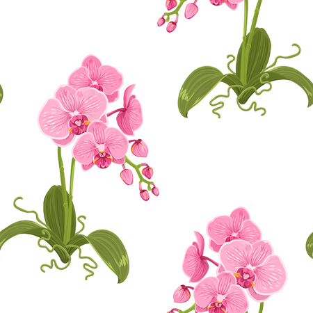 Realistic detailed drawing pink purple phalaenopsis moth orchid flowers, buds, green leaves, stem, roots. Exotic floral seamless pattern on white background. Vector design illustration. Illusztráció
