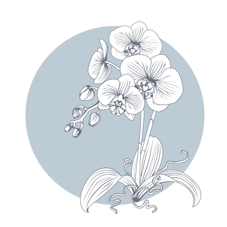 Hand drawn sketch orchid flower. Phalaenopsis contour image. Black and white with line art illustration.