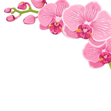 Modèle d'élément de bordure de décoration de cadre de branche florale d'orchidée. Bouquet de fleurs de fleurs exotiques de fleurs exotiques phalaenopsis rose vif rose, isolé sur fond blanc. Illustration de conception vectorielle. Banque d'images - 96900501