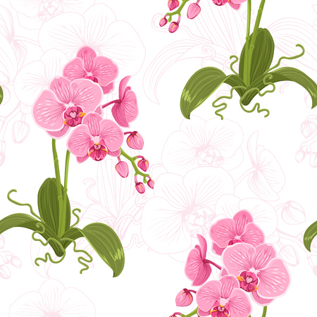 Realistic detailed drawing pink purple phalaenopsis moth orchid flowers, buds, green leaves, stem, roots. Botanical wallpaper illustration, line sketch silhouette on white background.