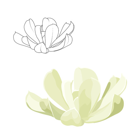 Echeveria runyonii sedum succulent flower. Black outline sketch mesh drawing. Detailed realistic green leaves botanical drawing side view. Interior decoration flowering plant. Stone rose rosette.