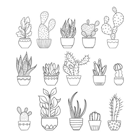Various exotic cactus succulent flowers species planted in pots. Potted cacti houseplants collection compilation set. Black outline sketch doodle drawing on white background. Isolated object element.