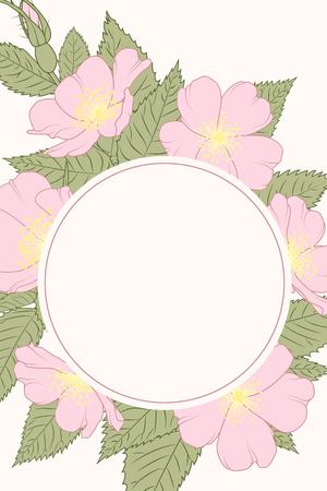Vintage botanical floral round border frame wreath template. Rosa canina wild rose pink flowers green leaves. Sping summer garden flowers. Vector design illustration.