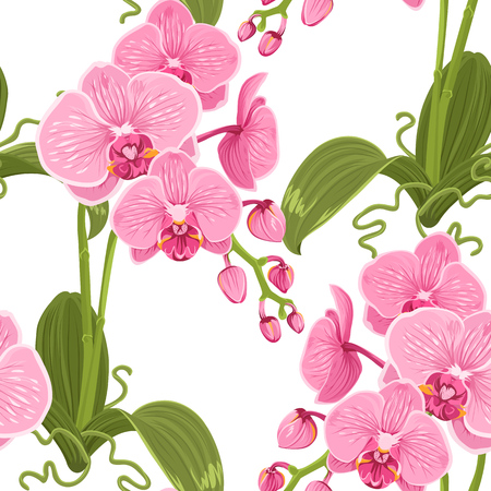Pink purple phalaenopsis moth orchid flowers, buds, green leaves, stem, roots. Botanical floral seamless pattern texture on white background. Vector design illustration for fashion, fabric, textile.