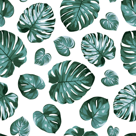 Monstera philodendron split leaves exotic tropical plant seamless pattern. Green blue ceriman windowleaf isolated on white background. Realistic detailed vector design illustration.