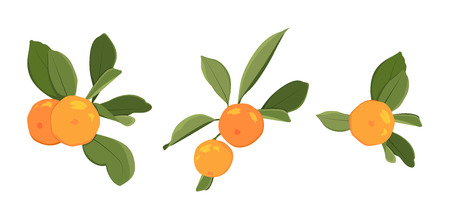 Ripe orange citrus organic juicy fruit on branch green leaves. Clementine tangerine mandarin harvest produce. Isolated vector design element on white background. Exotic tropical healthy juicy vitamin. Vettoriali