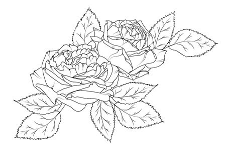 Amazing beautiful hand drawn bouquet of peonies. Black white outline sketch tattoo style. Rose peony flowers and leaves. Isolated vector design element illustration.
