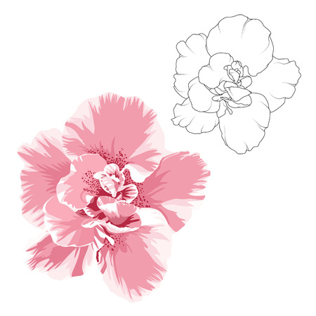 Camelia flower design elements set. Outline vector sketch black line drawing tattoo style. Realistic bright pink color flower macro close up view bloom blossom petals. Isolated on white background.