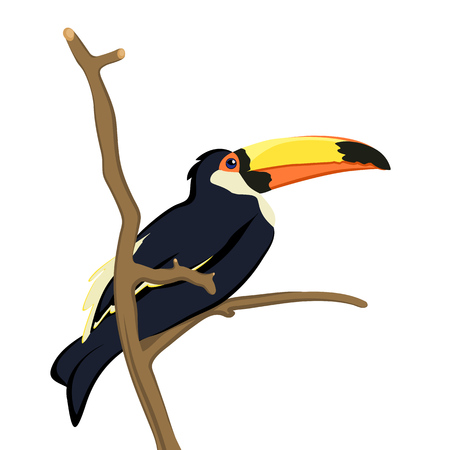 Exotic african bird toucan isolated on white background. Ilustrace