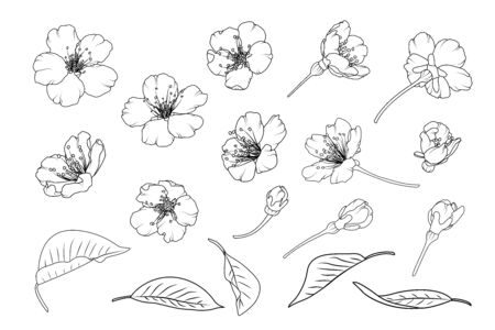 Sakura asian chinese japanese cherry tree flowers. Isolated elements. Spring bloom blossom, buds, branch, leaves. Botanical line design vector illustration. Black outline on white background.