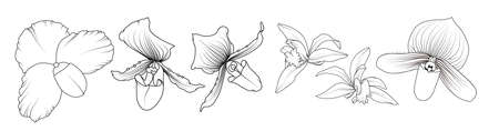 Isolated tropical orchid flowers. Realistic hand drawn outline sketch. Phalaenopsis cambria floral vector design illustration elements collection set. Black ink on white background.