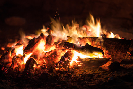 closeup: the coals of a campfire in the forest closeup