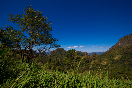 daylight: Nature landscape in Thailand- Daylight