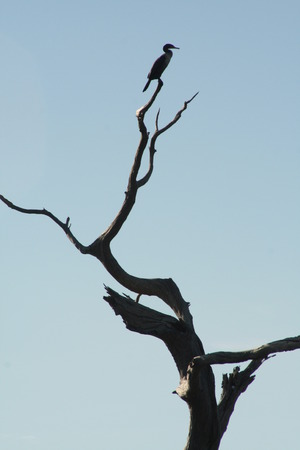 silhouetted bird in treetop photo