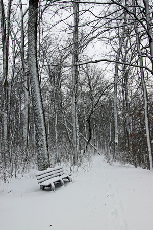 A snowy bench at Heritage Park in Indiana.