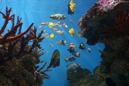 barrier: Marine Fish Stock Photo