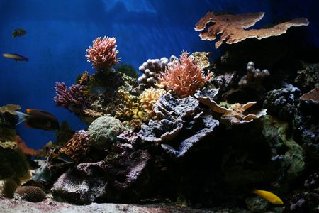 great barrier reef: Marine Fish - Tropical Coral Reef