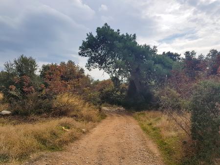 農村フィールドを囲む経路松やオリーブの木々 と面積