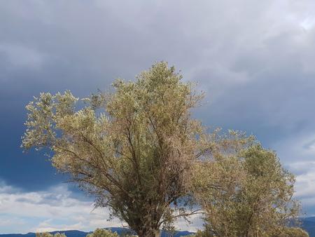 オリーブの木と曇り空の前景を葉します。 写真素材