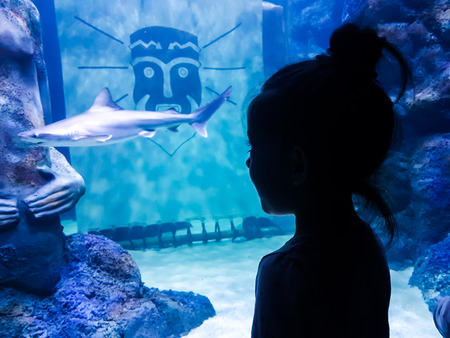 a little girl silhouette watching an aquarium with a baby shark 写真素材