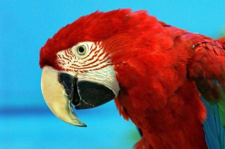 polly: parrot Stock Photo