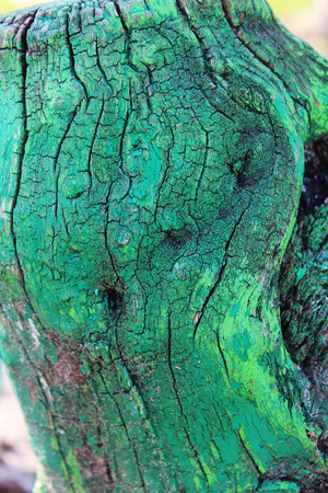 peeling rubber: Old tree trunk stump colored paint Stock Photo