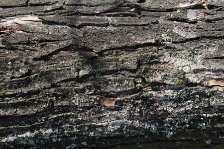 peeling rubber: Old tree trunk stump