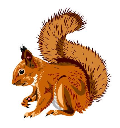 squirrel  イラスト・ベクター素材