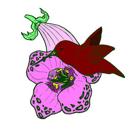 blockhead: hummingbird drinking nectar from a flower