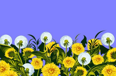 dandelion seed: Meadow with flowering dandelions