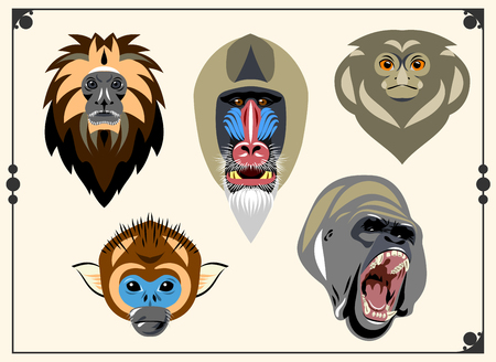 set of images of heads of monkeys  イラスト・ベクター素材
