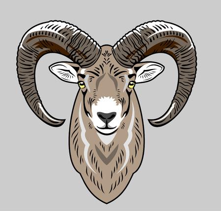 rams: rams head Illustration
